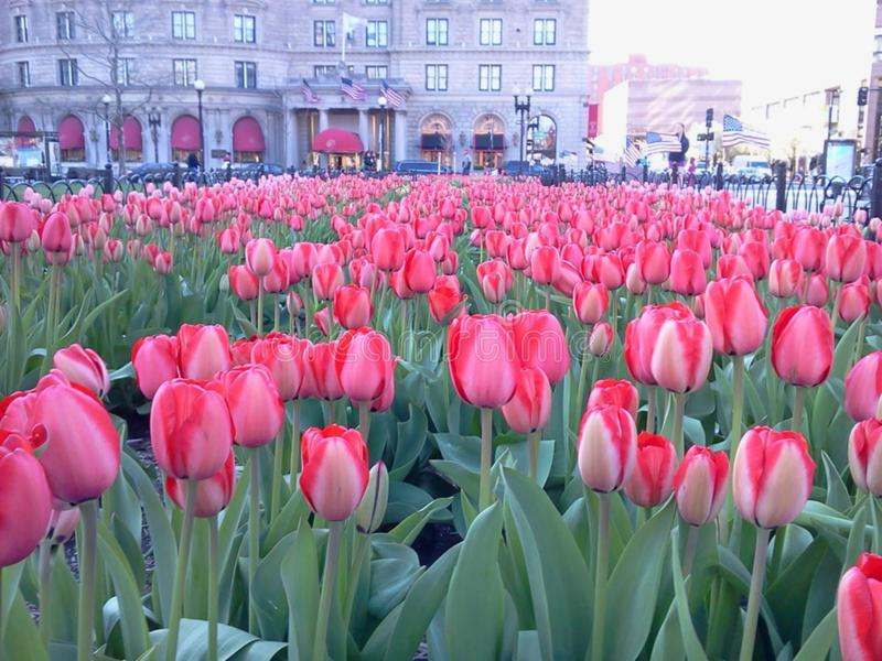 Wiosna w Boston obrazy royalty free
