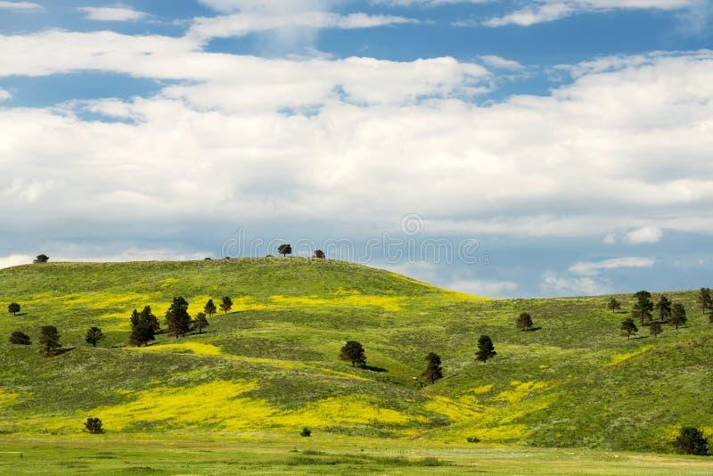 Wiosna w Czarnych wzgórzy południe Dakota zdjęcia royalty free