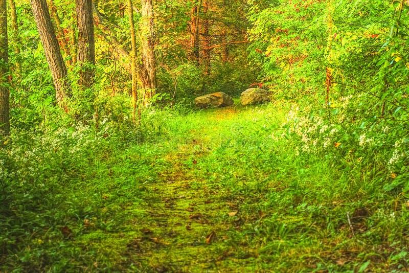 Wiosna w drewnach obrazy stock
