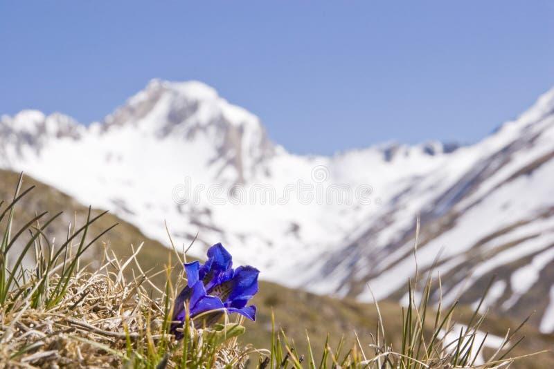 Wiosna w górach Południowy Tyrol obrazy stock