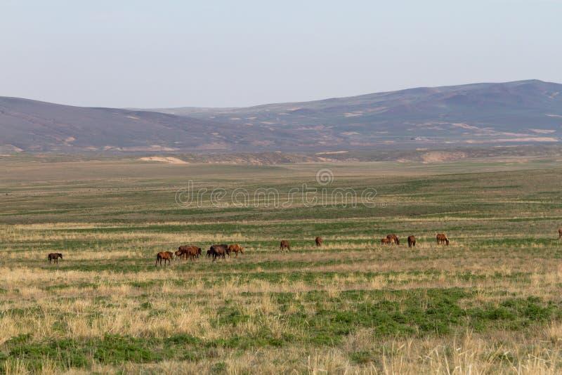 Wiosna w kazach stepie zdjęcie stock