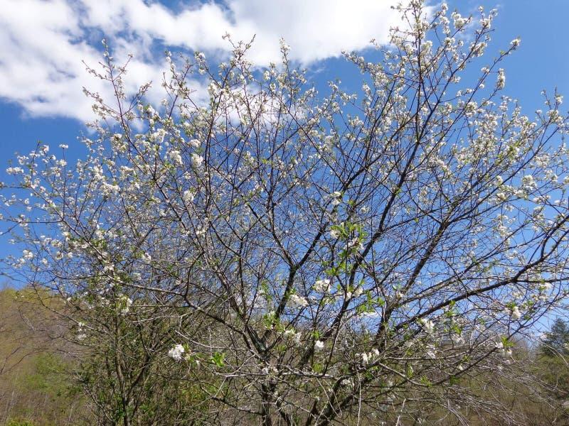 Wiosna w Kentucky obrazy stock