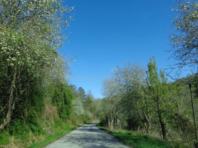Wiosna w Kentucky obrazy royalty free