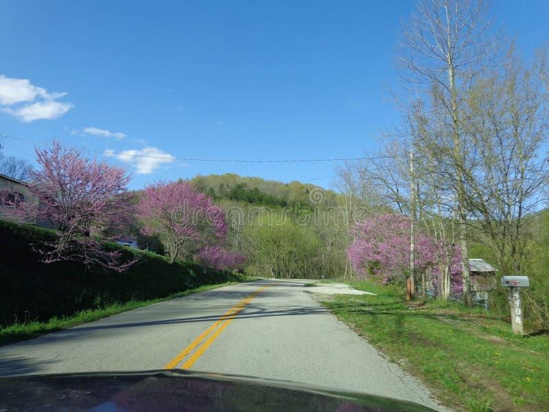Wiosna w Kentucky obraz royalty free