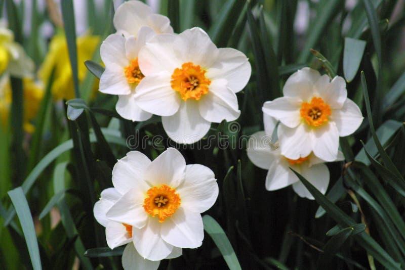 Wiosna w kwiacie 2019 V fotografia stock