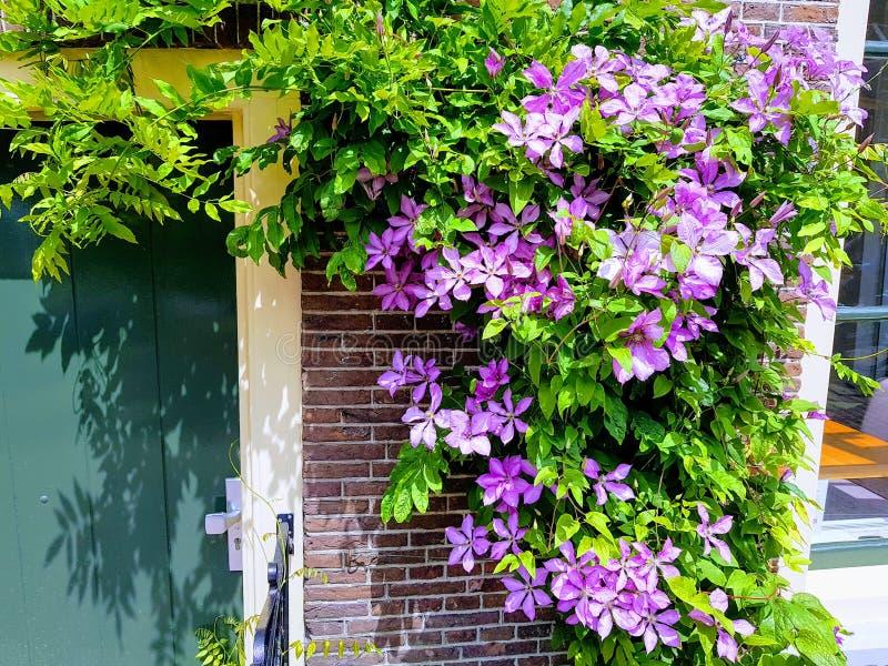 Wiosna w Leiden obraz stock