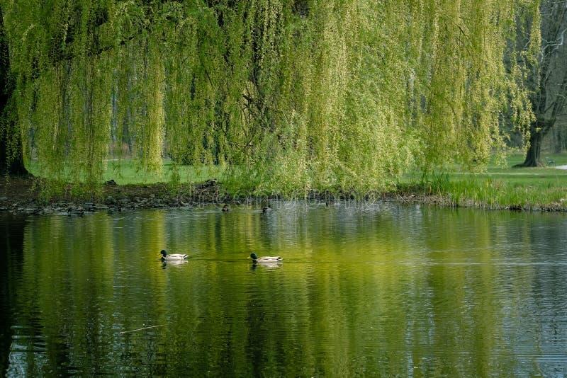 Wiosna w parku obraz stock