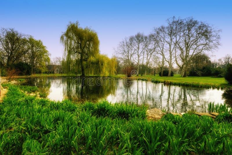 Wiosna w parku fotografia stock