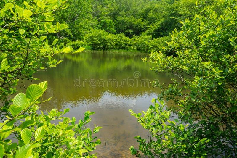 Wiosna widok Mały halizna młynu staw obraz stock