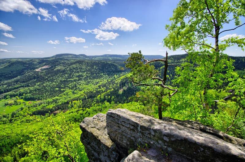 Wiosna widok na polach i lesie obrazy royalty free
