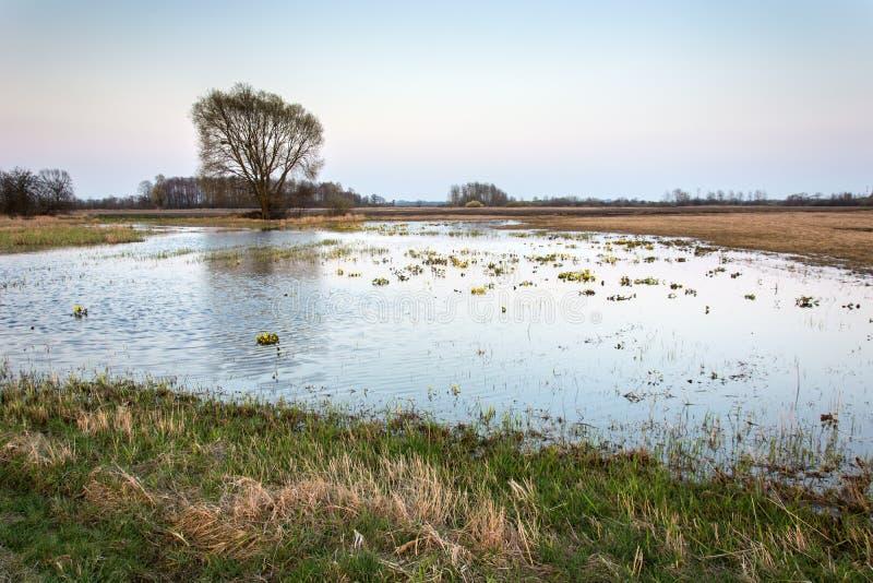 Wiosna widok zalewająca wielka łąka i pojedynczy drzewo obrazy royalty free