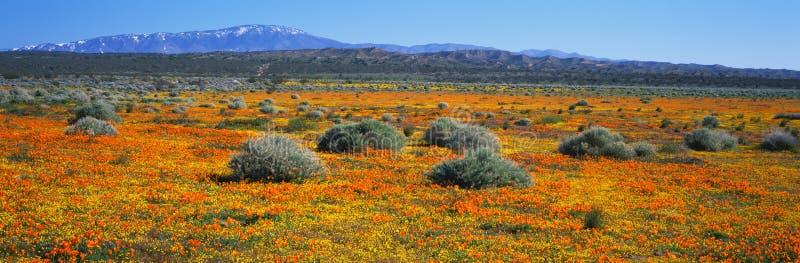 Wiosna wildflowers zdjęcia stock