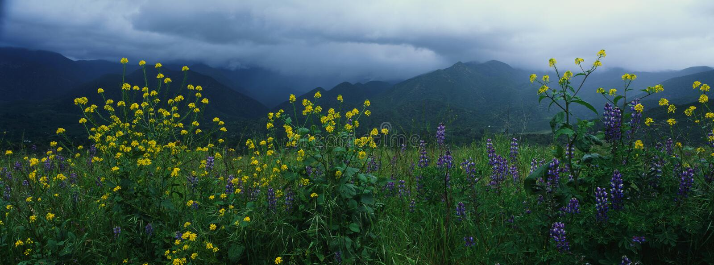 Wiosna wildflowers obraz royalty free