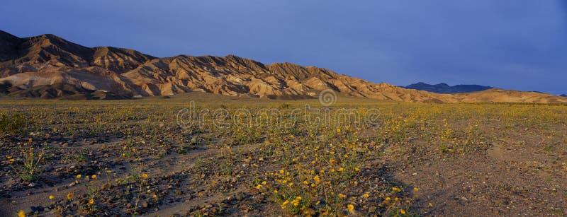 Wiosna Wildflowers zdjęcie royalty free