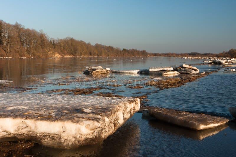 Wiosna wylew w Lielupe rzece zdjęcie royalty free