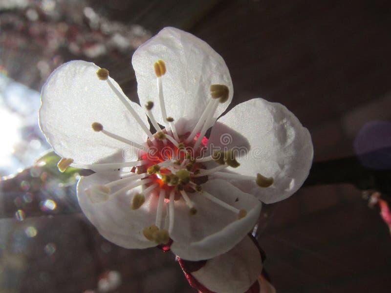 Wiosna wzrastał kwiaty w ogródzie fotografia royalty free