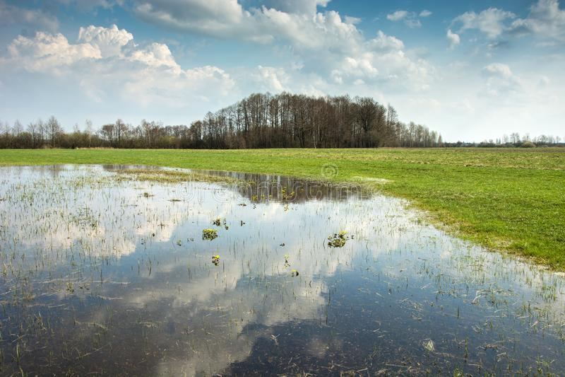 Wiosna zalewał łąkę, las na horyzoncie i chmury w niebie odbija w wodzie, obrazy royalty free