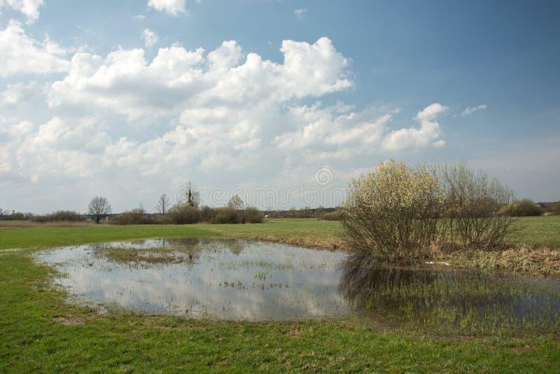Wiosna zalewał horyzont i chmury w niebie łąkowych i kwiatonośnych, fotografia stock
