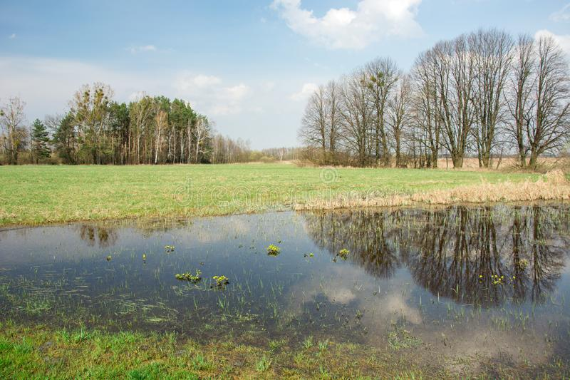 Wiosna zalewająca łąka, las horyzont, chmury i drzewa odbija w wodzie, zdjęcie stock
