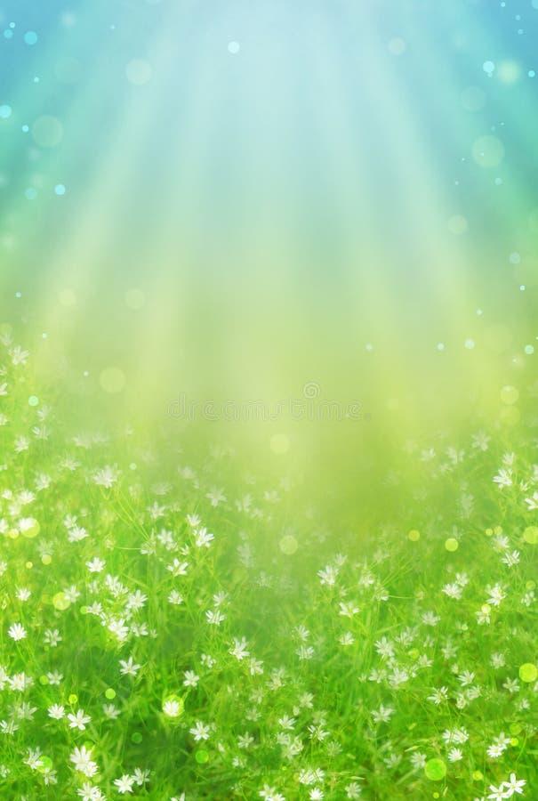 Wiosny łąka zdjęcie stock
