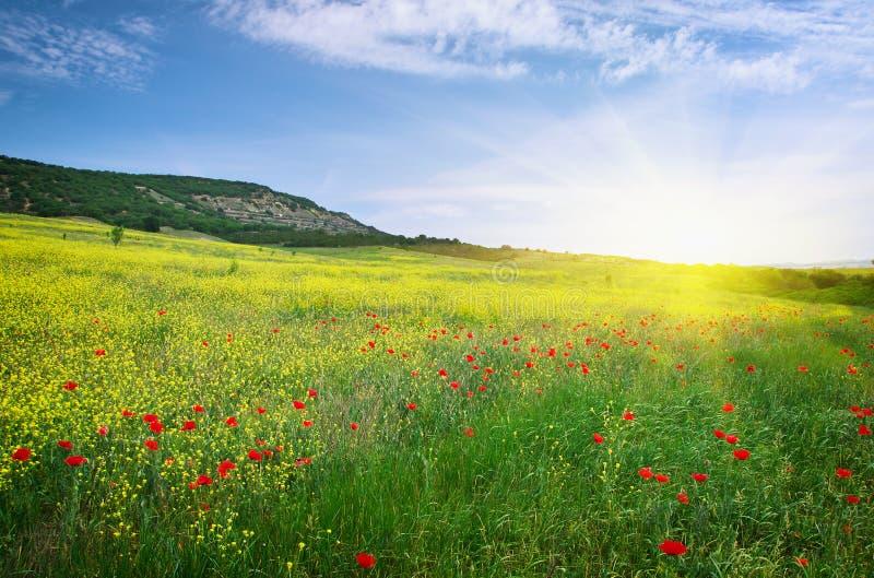 Download Wiosny łąka obraz stock. Obraz złożonej z nikt, horyzont - 57658305