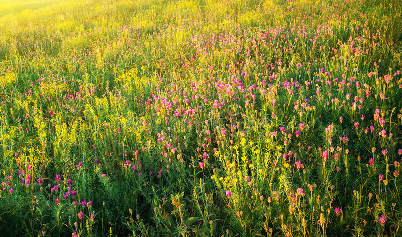 Download Wiosny łąka zdjęcie stock. Obraz złożonej z krajobraz - 57658462