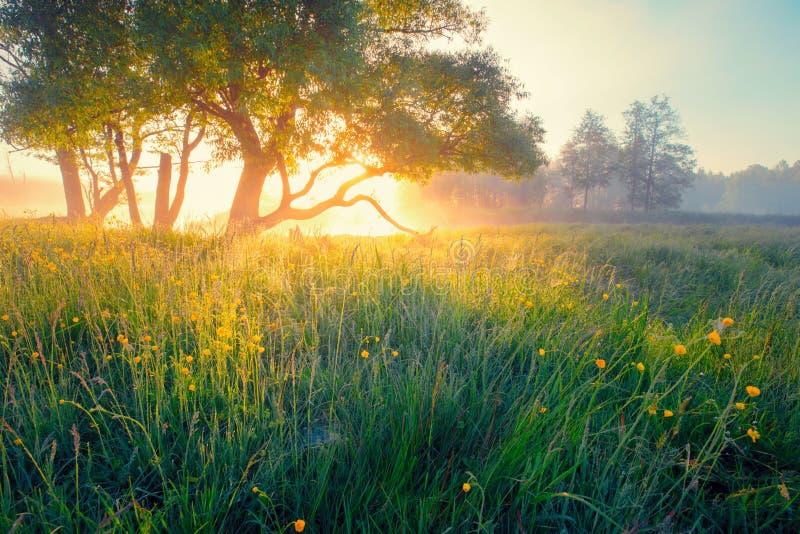 Wiosny łąka pogodna gwałt śródpolna krajobrazowa wiosna zdjęcie stock