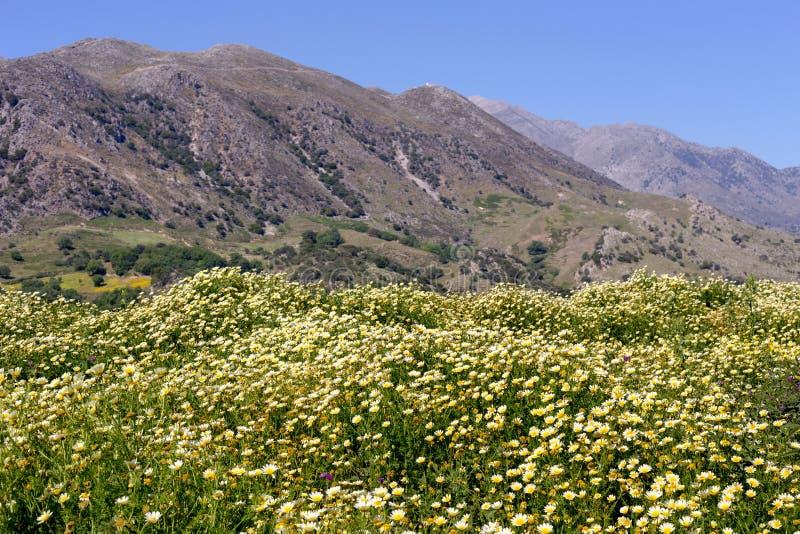 Wiosny łąka w górach obraz royalty free