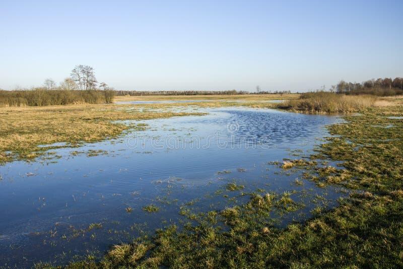 Wiosny łąka zalewająca z wodą obrazy royalty free