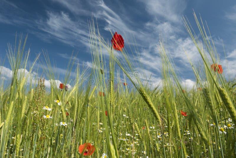 Wiosny świeżość fotografia royalty free