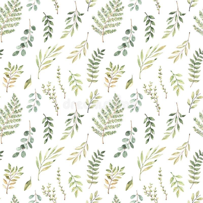 Wiosny akwareli bezszwowy wz?r Botaniczny tło z eukaliptusem, gałąź, paprocią i liśćmi, Greenery ilustracja kwiecisty ilustracji
