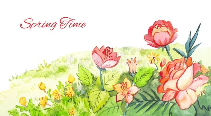 Wiosny akwareli stopka Rewolucjonistka kwitnie rysunek z akwareli pa ilustracji