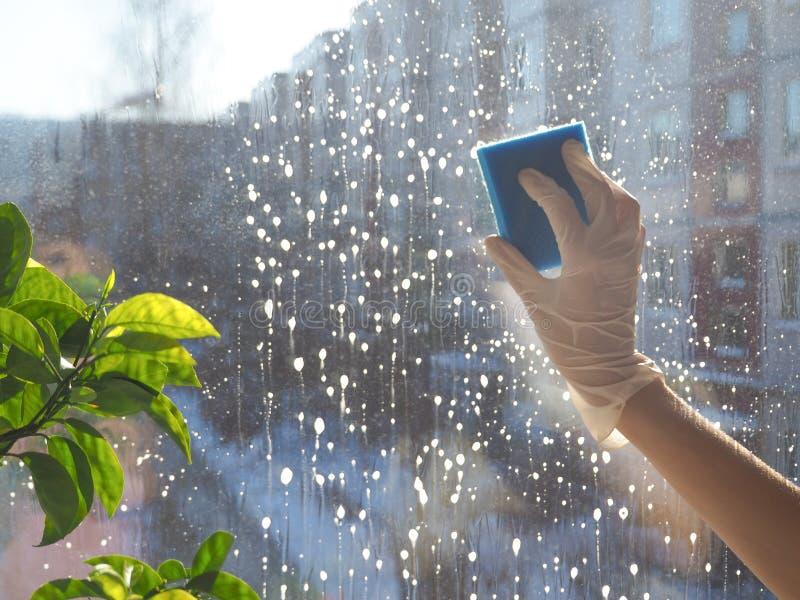 Wiosny cleaning - cleaning okno Kobiety ` s ręki myją okno, czyści obrazy royalty free