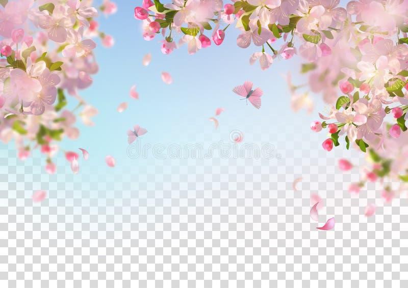 Wiosny Czereśniowy okwitnięcie ilustracja wektor