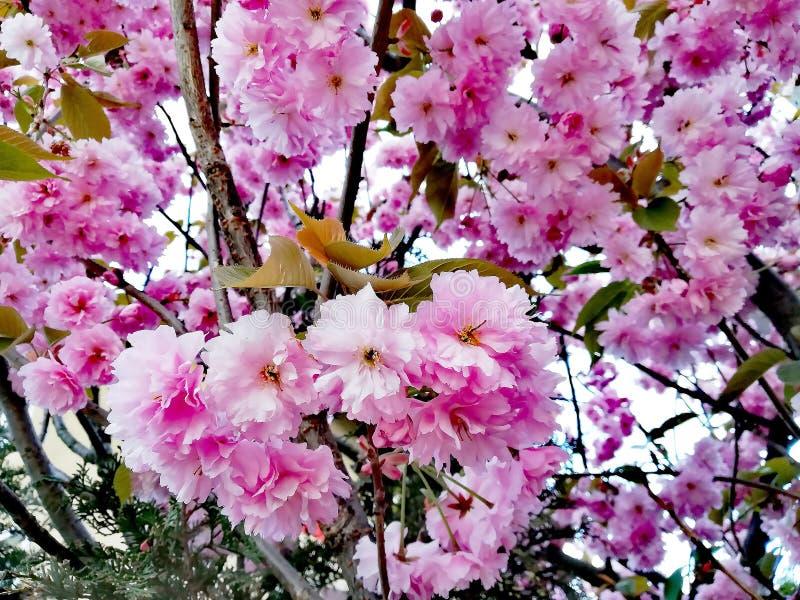 Wiosny drzewo z jaskrawymi kolorami obraz royalty free