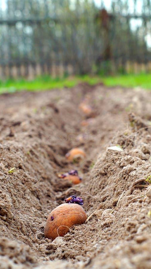 Wiosny flancowania grule w wiosce zdjęcie royalty free