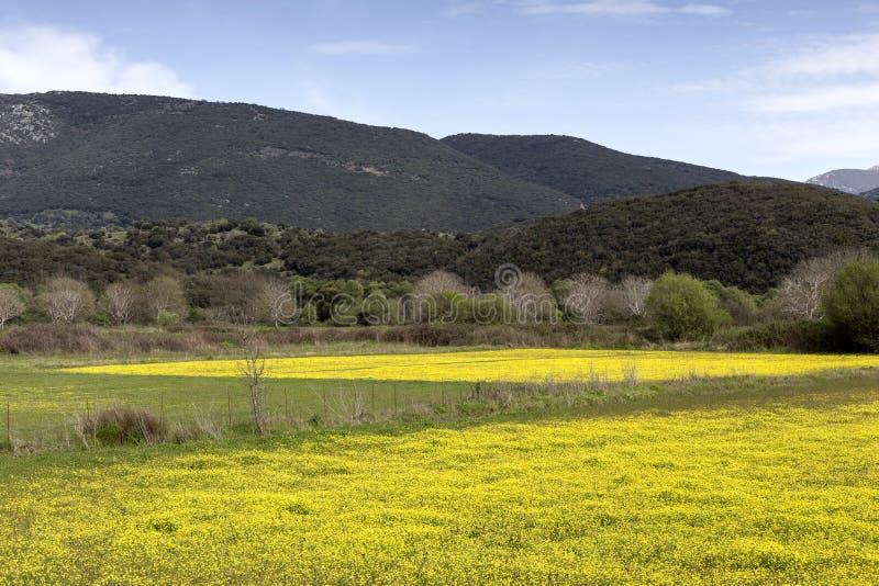 Wiosny góry łąka obrazy royalty free