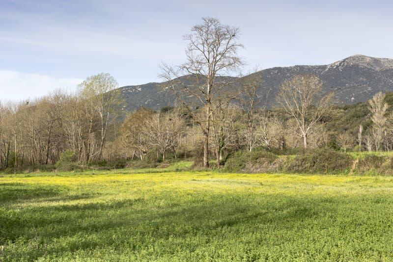 Wiosny góry łąka obraz stock