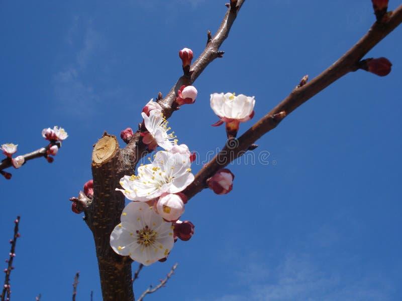 Wiosny gałąź zdjęcie royalty free