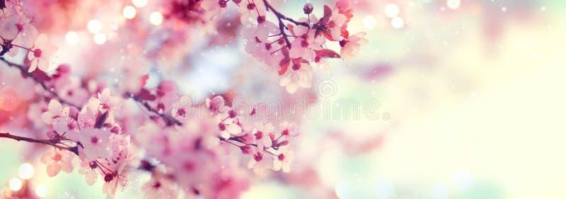 Wiosny granica lub tło sztuka z menchiami kwitniemy zdjęcia royalty free