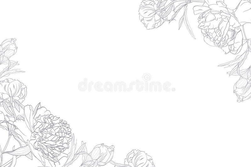 Wiosny granicy ramy kwiecisty szablon z dekorującym kątem Peonia kwiaty royalty ilustracja