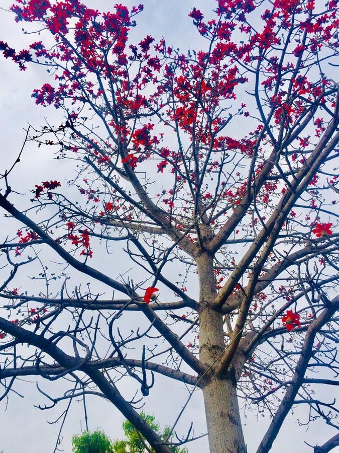 Wiosny i lat season's kwiatów drzewa piękno zdjęcia stock
