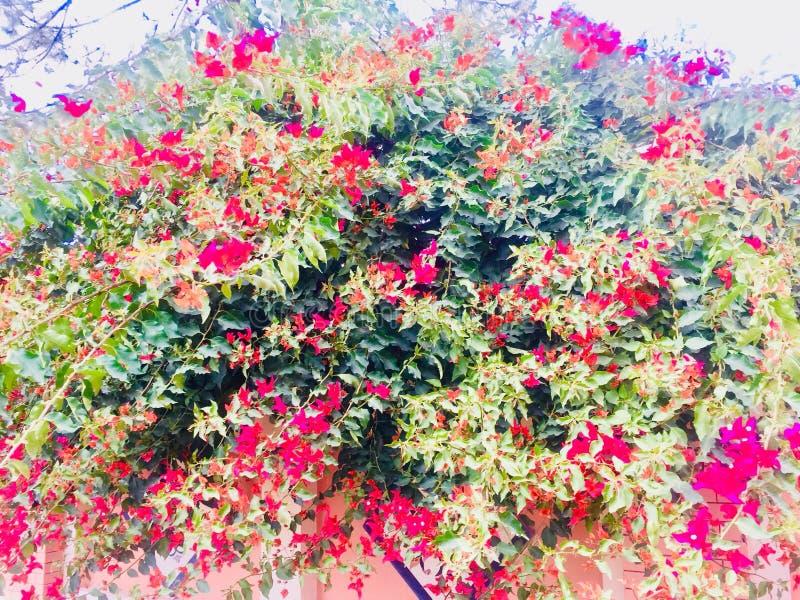 Wiosny i lat season's kwiatu rośliien piękno fotografia stock