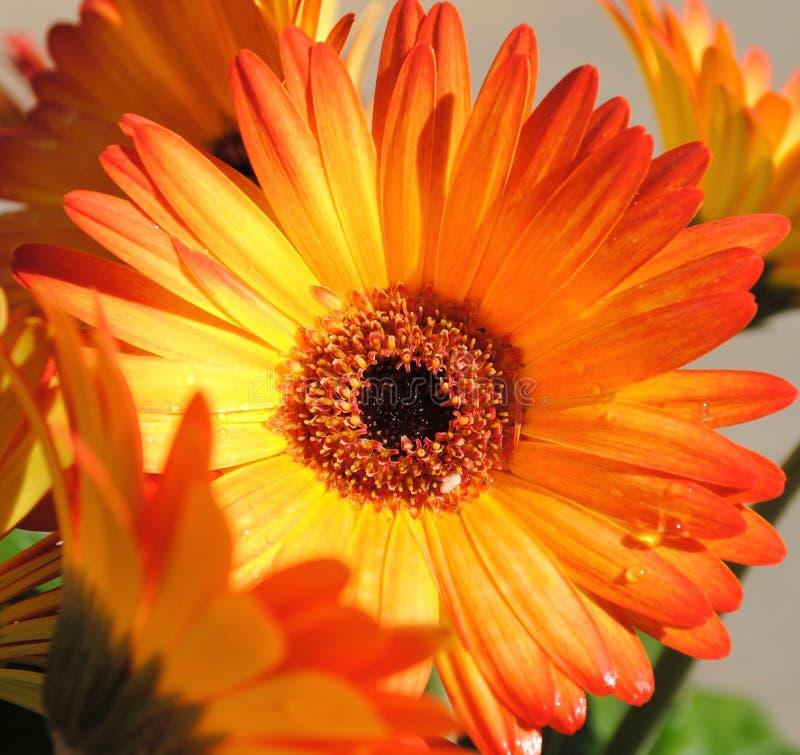 Wiosny i lata Jaskrawi kwiaty obraz stock