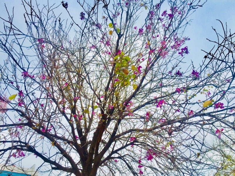 Wiosny i lata season's kwiatów piękno na drzewach obraz stock