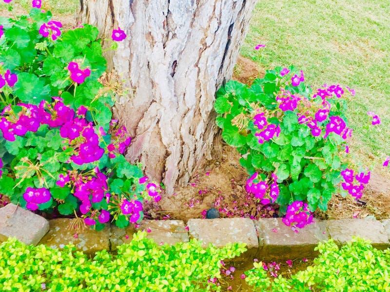 Wiosny i lata season's kwitną rośliny piękno obraz stock