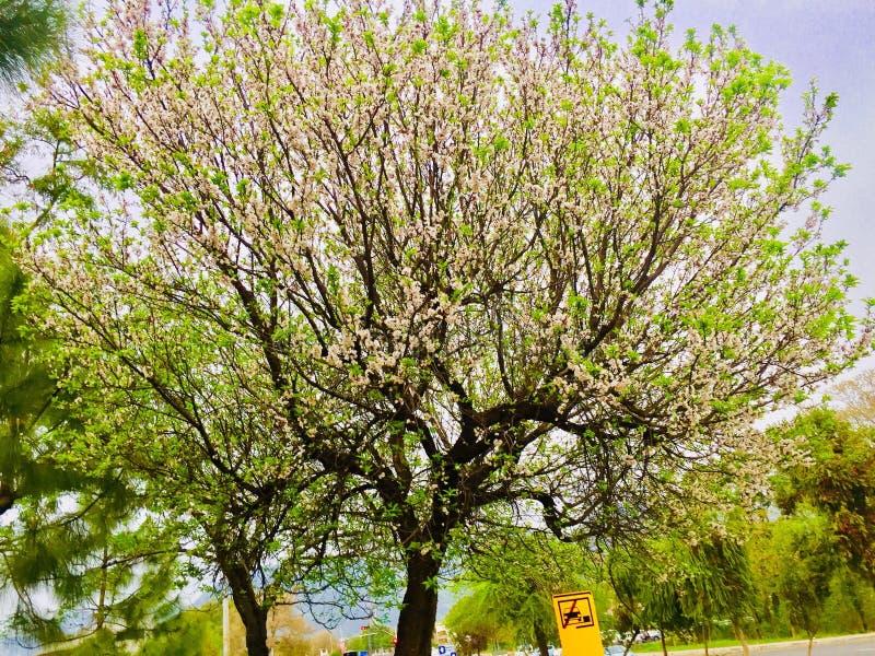 Wiosny i lata season's z obrazy stock