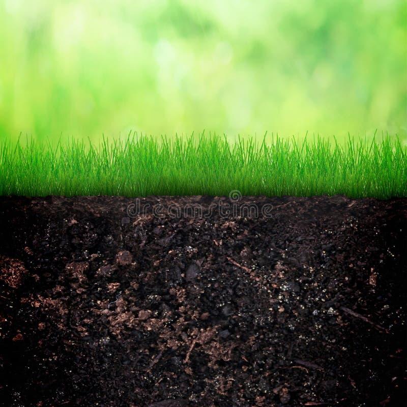 Wiosny i ziemi tło obrazy royalty free
