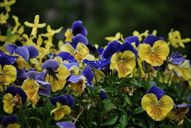 Wiosny Kiełkować Jest Tutaj zdjęcie stock
