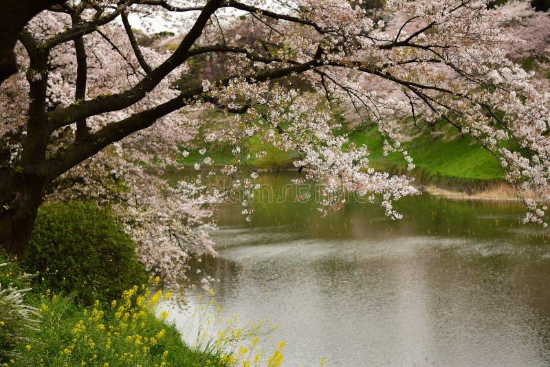 Wiosny kraina cudów zdjęcie stock